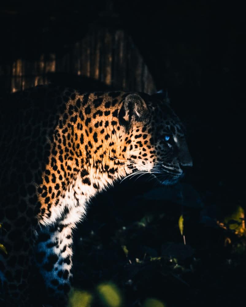 Yggdrasil Partners ReelPlay เพื่อปล่อย Jaguar SuperWays จาก Bad Dingo